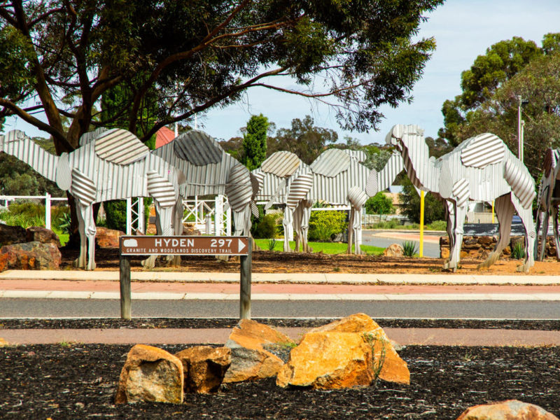Norseman Camel Roundabout