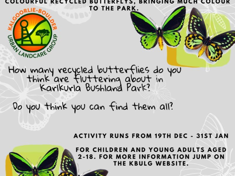 Recycled Butterflies Competition - Kalgoorlie